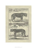 Panther and Leopard Premium Giclee Print by Denis Diderot
