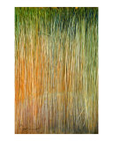 Paint Brush Photographic Print by Corrine Ellsworth