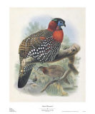Native Pheasant I Posters by Joseph Wolf