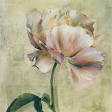 Floral Blush II Posters by Dennis Carney