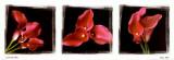 Calla Trio II Kunst von Ilona Wellmann