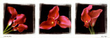 Calla Trio II Prints by Ilona Wellmann