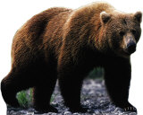 Grizzly Bear PAPPFIGUREN IN LEBENSGRÖSSE