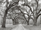 Oak Arches Print by Jim Morris