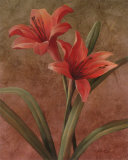 Orchid Red Posters