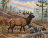 Elk Print
