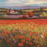 Poppy Pastures I Prints by T. C. Chiu