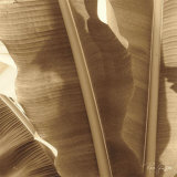 Banana Leaves I Prints by Rene Griffith