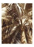 Palmier I Affiche par Rene Griffith