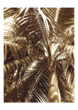 Palm Tree I Plakat af Rene Griffith
