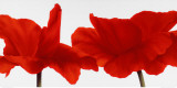 Red III Láminas por Yvonne Poelstra-Holzhaus