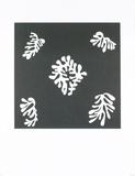 Voile de Calice Noir, 1950 Posters by Henri Matisse