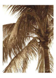 Palm Tree II Prints by Rene Griffith