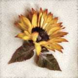 Sand Sunflower Posters by Donna Geissler
