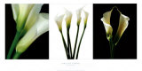 White Callas Print by Helvio Faria