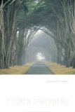Corridor of Cypress Posters by Soderberg