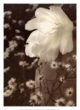 Glowing Tulip I Plakater af Donna Geissler