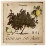 Citronnier, Cote d'Azur Posters by Vincent Perriol