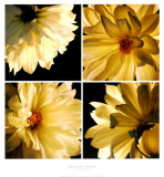 Dahlia Troupe Prints by Helvio Faria