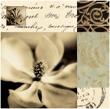 Magnolia Montage Art by Julie Greenwood