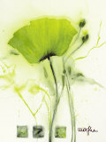 Coquelicot Vert I Posters par Marthe 