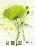 Coquelicot Vert I Posters par  Marthe