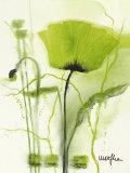 Coquelicot Vert II Poster par  Marthe