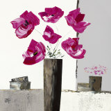 Pivoines Roses I Posters by Bernard Ott