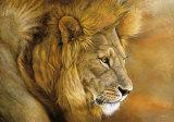 Lion du Serengeti Plakater af Danielle Beck