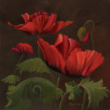 Vibrant Red Poppies II Prints by Gloria Eriksen