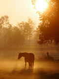 Horse Stands in a Meadow in Early Morning Fog in Langenhagen, Northern Germany Photographic Print