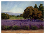 Lavender Fields Posters by Susan Hoehn