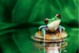 Red-Eyed Tree Frog Prints