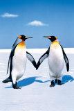 Penguin Love Reprodukcje
