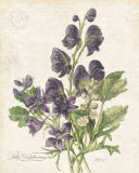 July Delphinium Poster von Katie Pertiet