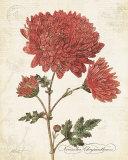 November Chysanthemum Poster av Katie Pertiet