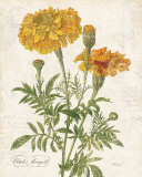 October Marigold Print by Katie Pertiet