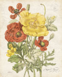 August Poppy Prints by Katie Pertiet