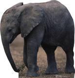 Baby Elephant Cardboard Cutouts