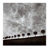 Michael Kenna - Ten and a Half Trees, Peterhof, Russia, 2000 Plakát