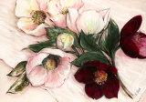 Elegant Anemones Art by Elisabeth Krobs