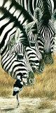 Noir et blanc Art par Renato Casaro