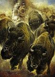 Buffeljagd Affiche par Renato Casaro