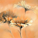 Apricot Summer II Prints by Elena Filatov