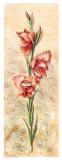 Gladiolos I Print by Eduardo Escarpizo