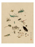 Insects and Toads Giclee Print