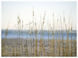 Coastal Grasses Posters by Jeff Kauck