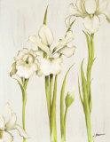 Flor Arlequin III Prints by Luisa Romero