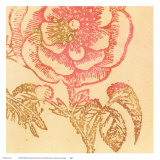 Coral Rose Prints by Swan Papel