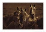 Belles de l'Ouest Posters par Tony Stromberg